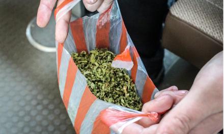 Cannabis in North Korea: an Update