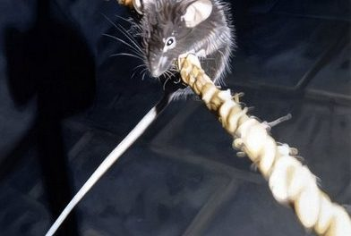 Of Rodents and Researchers