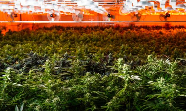 Demand Keeps Growing for Indoor Grow Sites