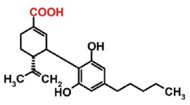 CBD did not improve cognition in Schizophrenia trial