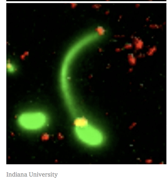 How bacteria lasso new DNA
