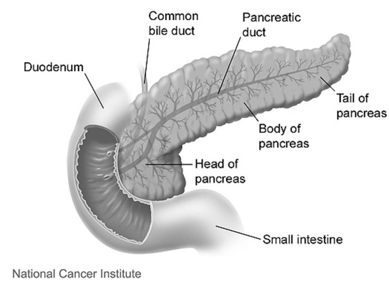 CBD 'could boost pancreatic cancer treatments'
