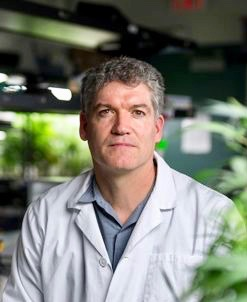 Cannabis research is budding up